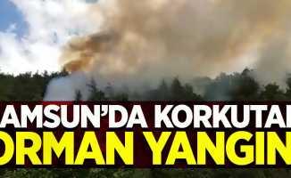 Samsun'da korkutan orman yangını