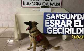 Samsun'da esrar ele geçirildi! 1 gözaltı