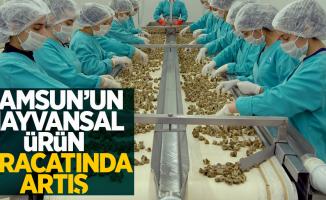 Samsun'un hayvansal ürün ihracatında artış