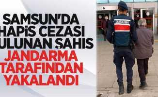 Samsun'da hapis cezası bulunan şahıs jandarma tarafından yakalandı
