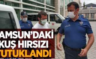 Samsun'daki kuş hırsızı tutuklandı