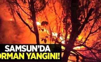 Samsun'da orman yangını!