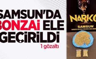 Samsun'da bonzai ele geçirildi: 1 gözaltı