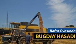 Bafra'da buğday hasadı başladı