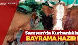 Samsun'da Kurbanlıklar Bayrama Hazır
