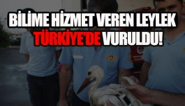 Bilime hizmet eden Leylek'i Mersin'de vurdular