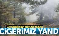 Samsun'da ormanlık alanda yangın çıktı
