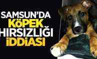 Samsun'da köpek hırsızlığı iddiası