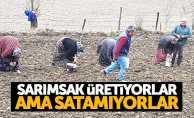 Samsun'da üretilen sarımsak elde kalıyor