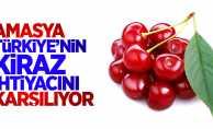 Türkiye'nin kiraz ihtiyacını Amasya karşılıyor