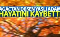 Samsun'da ağaçtan düşen yaşlı adam öldü