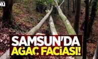 Samsun'da ağaç faciası! 1 ölü