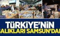 Samsun Türkiye'nin palamut ihtiyacını karşılıyor
