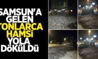 Samsun'a gelen tonlarca hamsi yola döküldü