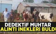 Samsun'da Dedektif Muhtar Çalıntı İnekleri Buldu